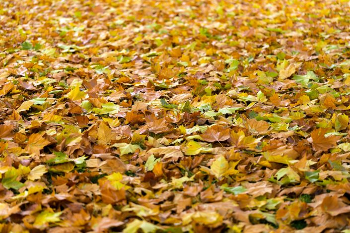 Things to Look for When Buying a Leaf Blower
