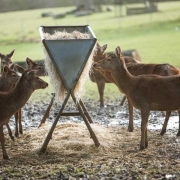feeding deer with game and animal feeders